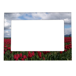 Red Tulip Field Magnetic Frame