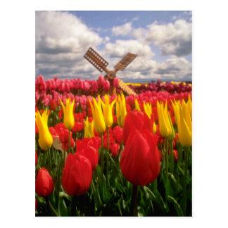 Red Tulip field, Oregon flowers Postcard