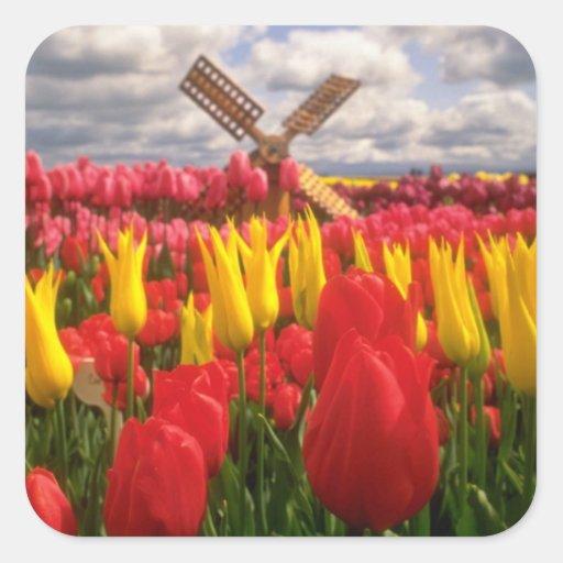 Red Tulip field, Oregon flowers Square Sticker