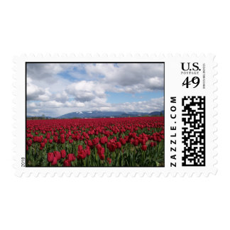 Red Tulip Field Postage