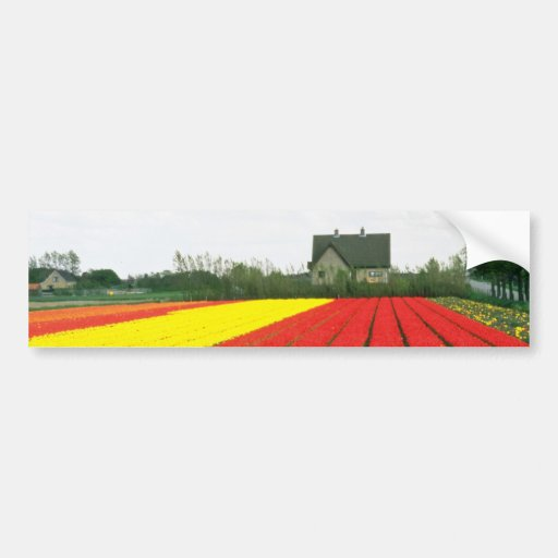 Red Tulip fields, Holland flowers Bumper Stickers
