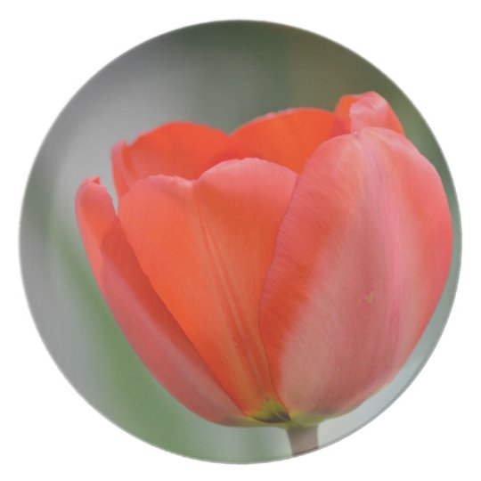 Red Tulip Floral Melamine Plate