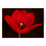 Red Tulip Flower Colorful Floral Stem Card