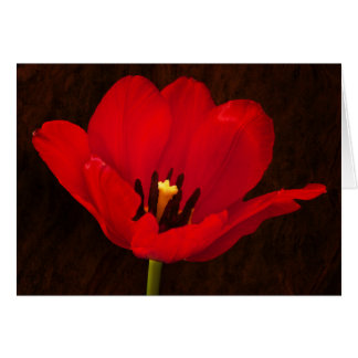 Red Tulip Flower Colorful Floral Stem Stationery Note Card
