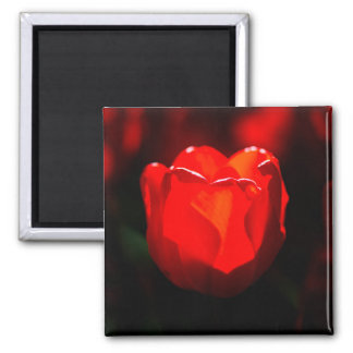 Red Tulip Flower - Fire 2 Inch Square Magnet