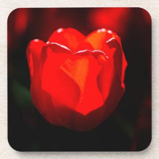 Red Tulip Flower - Fire Drink Coaster