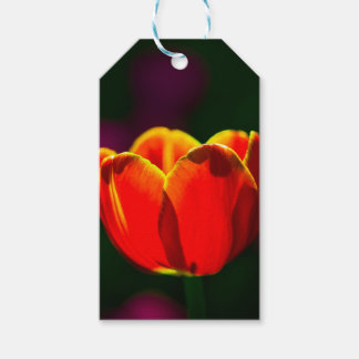 Red tulip flower gift tags