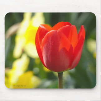 Red Tulip   Flower Photography Mouse Pad