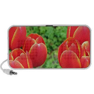 Red tulip flowers in bloom 1 PC speakers