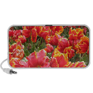 Red tulip flowers in bloom 2 speaker system