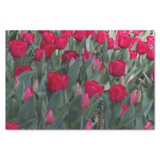 """Red Tulip Garden Floral 10"""" X 15"""" Tissue Paper"""