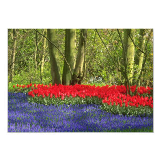 """Red Tulip glade, Holland flowers 5"""" X 7"""" Invitation Card"""