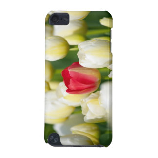 Red tulip in a field of white tulips iPod touch (5th generation) cover