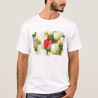 Red tulip in a field of white tulips T-Shirt