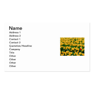 Red Tulip in a Yellow Tulip Field Business Card