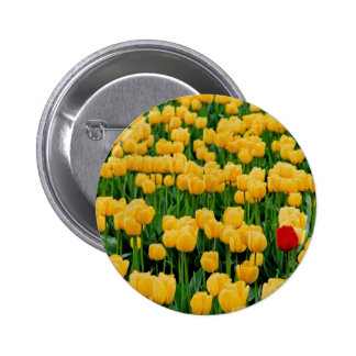 Red Tulip in a Yellow Tulip Field Button