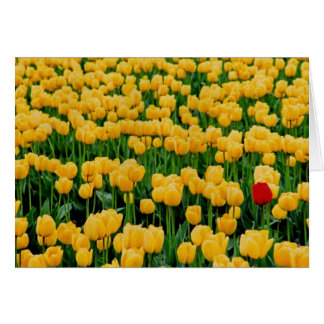 Red Tulip in a Yellow Tulip Field Card