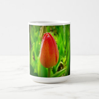 Red tulip in spring time coffee mug
