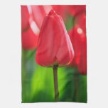Red Tulip Kitchen Towels
