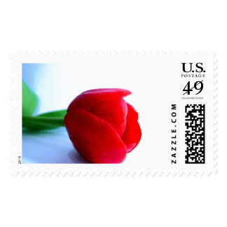 Red Tulip Large Stamp