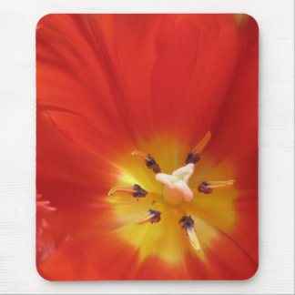 Red tulip mouse pad