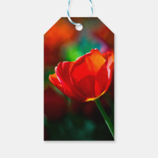 Red tulip - Mystery of blooming Gift Tags