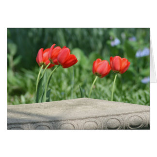 Red Tulip Note Cards