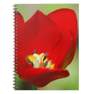 Red Tulip Notebook