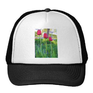Red Tulip Photo Mesh Hats