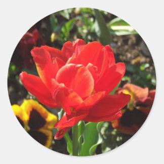 Red Tulip Photographs Round Stickers