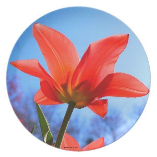 Red Tulip Plate fuji_plate