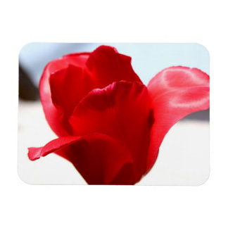 Red Tulip Rectangle Magnets