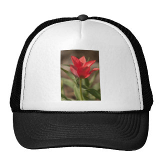 Red Tulip Reaching for the Sun Trucker Hat