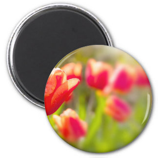 Red Tulips 2 Inch Round Magnet