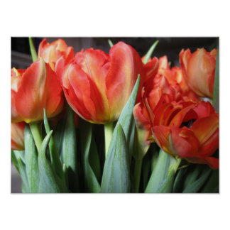 Red Tulips Bouquet Photo Poster Art
