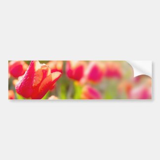 Red Tulips Bumper Sticker