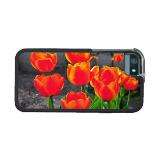 Red tulips iPhone 5/5S cover