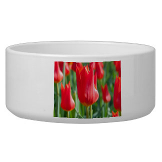 Red Tulips Dog Water Bowls