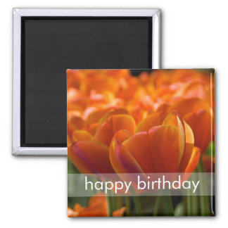 Red Tulips DSC0794 2 Inch Square Magnet