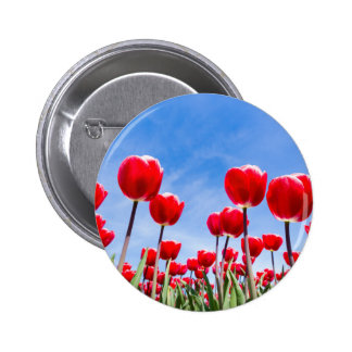 Red tulips field from below with blue sky button