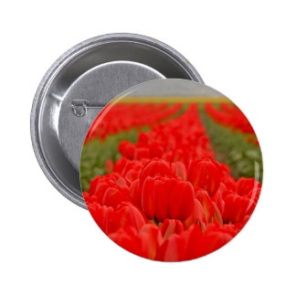 Red Tulips Field Photo Pinback Button