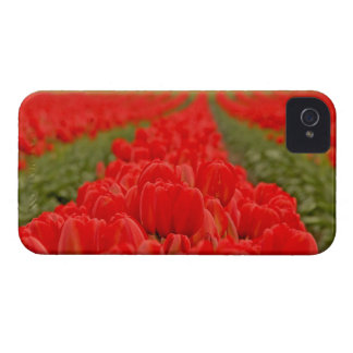 Red Tulips Field Photo iPhone 4 Cover