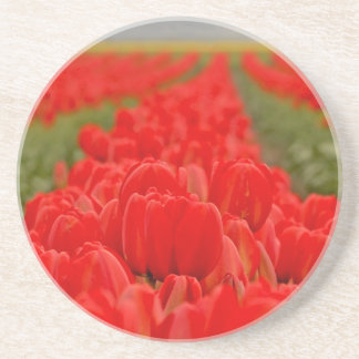 Red Tulips Field Photo Coaster