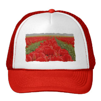 Red Tulips Field Photo Hats