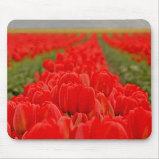 Red Tulips Field Photo Mouse Pads