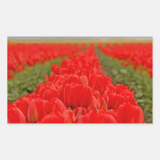 Red Tulips Field Photo Rectangular Sticker
