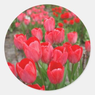 Red tulips flowers classic round sticker