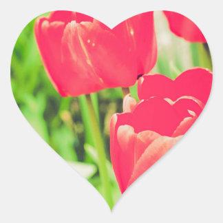 Red tulips flowers heart sticker