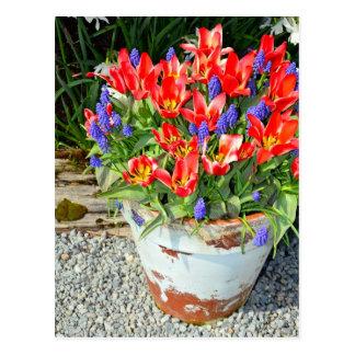 Red tulips in flowerpot print postcard