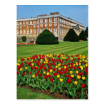 Red Tulips in Hampton Court, London, England flowe Post Card